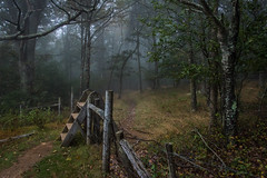 Hike With Me (EXPLORE!) (riqwammy) Tags: nature forest natural trees grass fence outside outdoors nikon hiking path hike trail d750 recreation ladder blueridgeparkway brp rockyknob