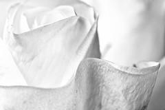 ... (jankarelkok) Tags: artistieknaaktfotograaf beeldmaker fotograaf fotografie fotostudio harderwijk jankarelkok landschapsfotograaf nederland portretfotograaf studio studiofotografie wwwjankarelkoknl