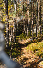 (thedrowsy) Tags: nature sweden swe forest hike hiking sony alpha a7riii tones mood jämtland sverige norrland