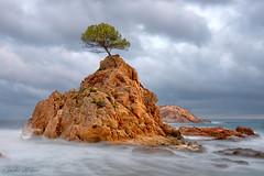 Tossa de Mar, Costa Brava (impodi@gmail.com) Tags: costabravamediterraneo españa tossademar landscape paisaje nikon color sea beach mar costa nubes cielo arbol tree