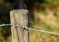 Fence Post (linda.addis) Tags: flickrlounge weeklytheme gatesfences