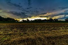 The last sun rays (FVillalpando) Tags: sunsetsummer sunset landscape sky light agriculturefield clouds ngysa