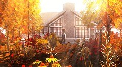 All at once, summer collapsed into Fall (Alexa Maravilla/Spunknbrains) Tags: trompeloeil gallandhomes fameshed heart hive secondlife fall autumn house home architecture building flowers trees nature outdoors gold red yellow wildflowers virtual virtualworld virtualliving landscape digitalphotography digitalart 3d mesh ash tree echinacea pumpkin