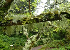 Beara Peninsula, Ireland 2019 (wonky knee) Tags: bearapeninsula ireland lichens dereengardens bryophytes