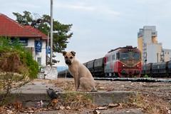 2-10-2019 - Băbeni (berlinger) Tags: băbeni romania cfr marfa kutter sulzer 060da eisenbahn railways railroad animal train freighttrain güterzug rumänien