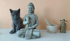 maya (henrynobru) Tags: cat sculpture art figurine mammal sitting statue portrait pet standing person one stonecarving indoor looking animal noperson ceramic small front worship meditation buddha felidae white decoration artifact black doll