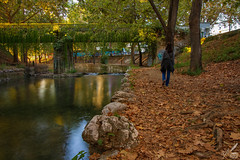 Autumn Leaves ♪—É. Piaf (ioannis_papachristos) Tags: lethaeus autumn fall leaves autumnleaves fallingleaves song lyrics édithpiaf piaf chanson red gold river lēthaeos litheos trikala greece thessaly bridge nature riverbank stones afternoon october leave goaway walkaway street cityscape scenery emotive miss missing planetrees water silkywater longexposure canon papachristos eosrp mirrorless culture emotion nostalgia root shine reflection french français trees love amour separation
