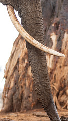 Randilen WMA (Duma Overland) Tags: randelin wma wildlife management elephant conservation tanzania africa safari natgeo