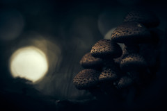 From the depth of darkness (micke.vmix) Tags: carlzeiss zeiss aposonnart2135 sonnar135f2zf d850 mushroom