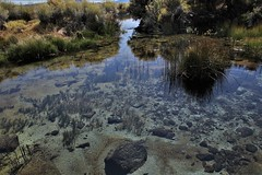 Clear Waters (rlt64) Tags: water ponds