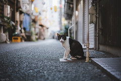 猫 (fumi*23) Tags: ilce7rm3 sony emount a7r3 animal alley cat chat katze gato neko street ねこ 猫 ソニー 路地 bokeh depthoffield 55mm sonnartfe55mmf18za sel55f18z sonnar
