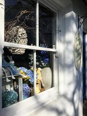Window and Wall (esallen52) Tags: window shop florist light shadows outdoors daytime sunlight display frame