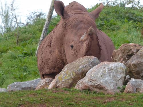Stealth Rhino!