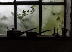 Itsy Bitsy Spider (michael_hamburg69) Tags: wollspinnerei badsegeberg förderverein wolle fördervereinwollspinnereiblunckev kurhausstrase38 flickrtreffen wool woolspinningmill germany deutschland oilcan ölkanne öl spinne spider window fenster efeu ivy plant ölspritzkanne handölkanne fensterbank light licht availablelight