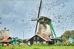 Windmill day (OscarCordeiro) Tags: windmills rx10m3 rx10 sony zaanseschans netherlands