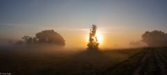 Morgenstund hat... (Jörg Kage) Tags: sonne sun sunrise natur nebel landschaft landscape fog baum bäume tree trees feld field sonnenaufgang nature misty neblig elitegalleryaoi bestcapturesaoi aoi