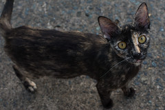 2018-06-06 Puerto Rico San Juan Parque 001 (Ray Bernoff) Tags: sanjuan puertorico travel cat straycat cats