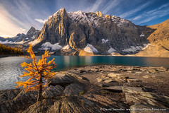 Lone Holdout (David Swindler (ActionPhotoTours.com)) Tags: alberta britishcolumbia canada canadianrockies fallcolor autumn fall lake larch lonelarch lonetree