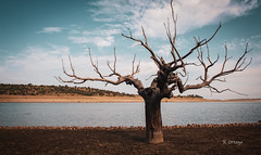 Naturaleza muerta (Rubenkeke) Tags: árbol seco landscape portrait agua water vida aislado isolated sky cielo azul verano summer nature naturaleza spain turismo tree beautifull