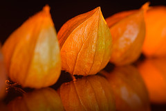"Little Physalis ... Macro Mondays - Theme ""In a row"" (Martin Bärtges) Tags: mm macromondays macro mondays physalis inarow row ineinerreihe makro makroliebhaber makrofotografie macrolovers macrophotography nikon z6 nikonfotografie nikonphotography inside drin studio studiophotography studiofotografie flash blitz blitzanlage flashlight colorful farbenfroh orange nature natur naturfotografie naturliebhaber naturephotography naturelovers lampionblume plants pflanzen flowers blumen blühen blüten autumn autumncolors herbst herbstfarben"