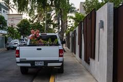 2018-06-06 Puerto Rico San Juan Parque 006 (Ray Bernoff) Tags: sanjuan puertorico travel pickuptruck flowers