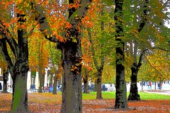 Autumn (thomasgorman1) Tags: trees leaves fall autumn deciduous germany october berlin colorful colorized effects travel nikon