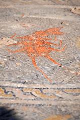 Volubilis (thomaspollin [thanks for 2.2 million views !!!]) Tags: thomaspollin thomas pollin maroc marokko morocco afrique afrika africa المغرب almaghrib ⵜⴰⵎⵣⵖⴰ tamazgha ⵍⵎⵖⵔⵉⴱ lmeġrib almaġrib volubilis site archéologique romain vestiges vestigesromains ruines