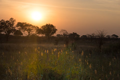 Savanne (100er) Tags: afrika botswana savanne okavangodelta sonnenuntergang 100er nikon