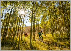 Park City Fall Aspen Singletrack (Photo-John) Tags: aspens aspengrove aspentrees utah gold golden fall autumn foliage outdoors travel adventure bike cycling singletrack mountainbike mountainbiking mountainbikers sports actionsports sunburst sunflare wasatchmountains parkcity ride aspen yellow leaves leafpeeper nature seasons trees mountains stockphotography stockphoto outdoorphotography sportsphotography actionphotography editorialphotography sonyalpha sonya6500