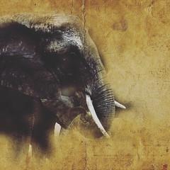 BLESS THE ELIES (eliewolfphotography) Tags: elephant elephants animals africa african safari tanzania tarangire wildlife wildlifephotographer wildlifephotography nature naturelovers nikon naturephotography natgeo conservation