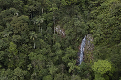 Cloud forest waterfall (ggallice) Tags: waterfall chontachaca manuendemicstation cusco rainforest cloudforest andes andesmountains peru amazon amazonia jungle