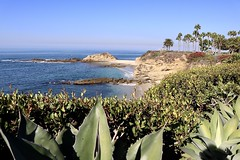 Benni's Cove (Bennilover) Tags: beach beaches montage california lagunabeach south benni cactus succulents sand ocean pacific