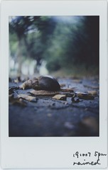 the world spins (breeze.kaze) Tags: instantfilm mintinstantflextl70 fujiinstaxminifilm closeuplens f8 autumn lateafternoon fallen leaves snail swirlybokeh