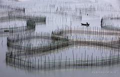 Xiapu (Rolandito.) Tags: xiapu china chine fujian asia asie 霞浦县 mudflat bamboo kelp farming