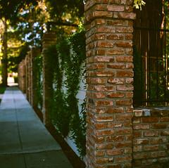 Willow Glen, California (bior) Tags: willowglen hasselblad500cm ektar25 kodakektar ektar expiredfilm 120 mediumformat 6x6cm sanjose california suburb wall brick