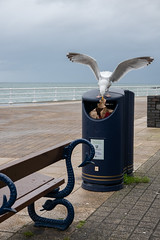 Luck this Time (Jocey K) Tags: triptoukanderoupe2019 june uk wales aberystwyth sea seaside evening beach seagull birds bin rubbishbin sky sign