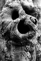 """witty neighbours"" No. 2   (character 😝 study) (tuvidaloca) Tags: naturaleza tree blancoynegro winter estudio chistoso humor bw nature natur studie baum sw invierno schwarzweis study árbol humour humoristisch humorístico humorous pareidolie pareidolia"