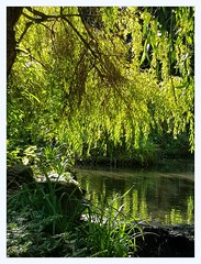 a feast of greens (overthemoon) Tags: uk northyorkshire scarborough peasholmpark green peaceful bucolic park greenery water lake england