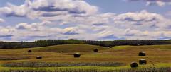 Summer's End (><Nessa><) Tags: haybales saskatchewan prairies landscape outside fields sky horizon clouds gold blue copyrightvanessabartosek