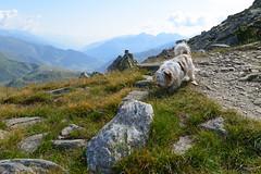 A cute new hiking buddy. : ) (balu51) Tags: wanderung wandern zufallsbekanntschaft hund landschaft berge hiking ascent dog landscape mountains morning summer august 2019 copyrightbybalu51