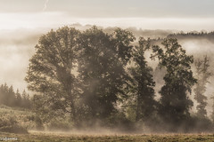 26092016-DSC_0022 (vidjanma) Tags: bonnerue arbres brume matin vallée
