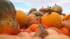 - Herbstdeko am Strassenrand - (Cucurbita) - (HOR-BS 696) Tags: berndsontheimer badenwürttemberg herbst kürbis cucurbita