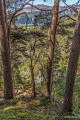 Meall Fuar-mhonaidh and Loch Ness from above Foyers Gorge. (Scotland by NJC.) Tags: lakes lochs reservoirs waters meres ponds pool lagoon lago 湖 jezero sø meer järvi lac 호수 innsjø озеро valley vale gorge dale glen strath cwm coombe rift faultline وادٍ 山谷 vallei valle laakso 谷間 계곡 trees foliage vegetation arboretum شَجَرَة 树 drvo strom træ árbol puu arbre baum 木 나무 tre drzewo copac дерево lochness foyersgorge meallfuarmhonaidh ravine canyon chasm 峡谷 garganta