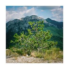 Green Green No Man's Land (Thomas Listl) Tags: thomaslistl color nomansland av af nature landscape plant green yashica yashicamat124g analog filmphotography film fuji fujipro400h 6x6 mediumformat mediumformatfilm tlr mountain 120