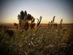 Lever de Soleil, Notre-Dame de Grâce (laudato si) Tags: gard provence oliviers sun morning sunrise aurore