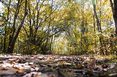 Season Of Change (aaron_gould) Tags: naturephotography natur leaf leaves flickr outside nikkor tree light sun landscape yellow fall autumn trees orange ohio bokeh