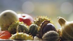 - Herbstdeko - (Cucurbita) - (HOR-BS 696) Tags: berndsontheimer badenwürttemberg herbst kürbis cucurbita