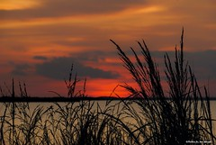 Sailor's delight.... (Joe Hengel) Tags: sailorsdelight lewes lsd lowerslowerdelaware de delaware sussexcounty sky clouds cloudy evening eveninglight eveningskies horizon statepark park capehenlopenstatepark capehenlopen grass grasses dunegrass bay delawarebay silhouette silhouettes