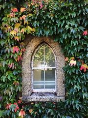 Roebuck Castle (UCD Staff Photography Club) Tags: ucd universitycollegedunblin ivy virginiacreeper window roebuckcastle belfield ireland autumnleaves