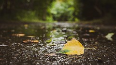 On the Trail ... (vanessa violet) Tags: trail onthetrail path grandconcourse waterfordrivertrailway leaf leaves autumn fall rain puddles vanessaviolet